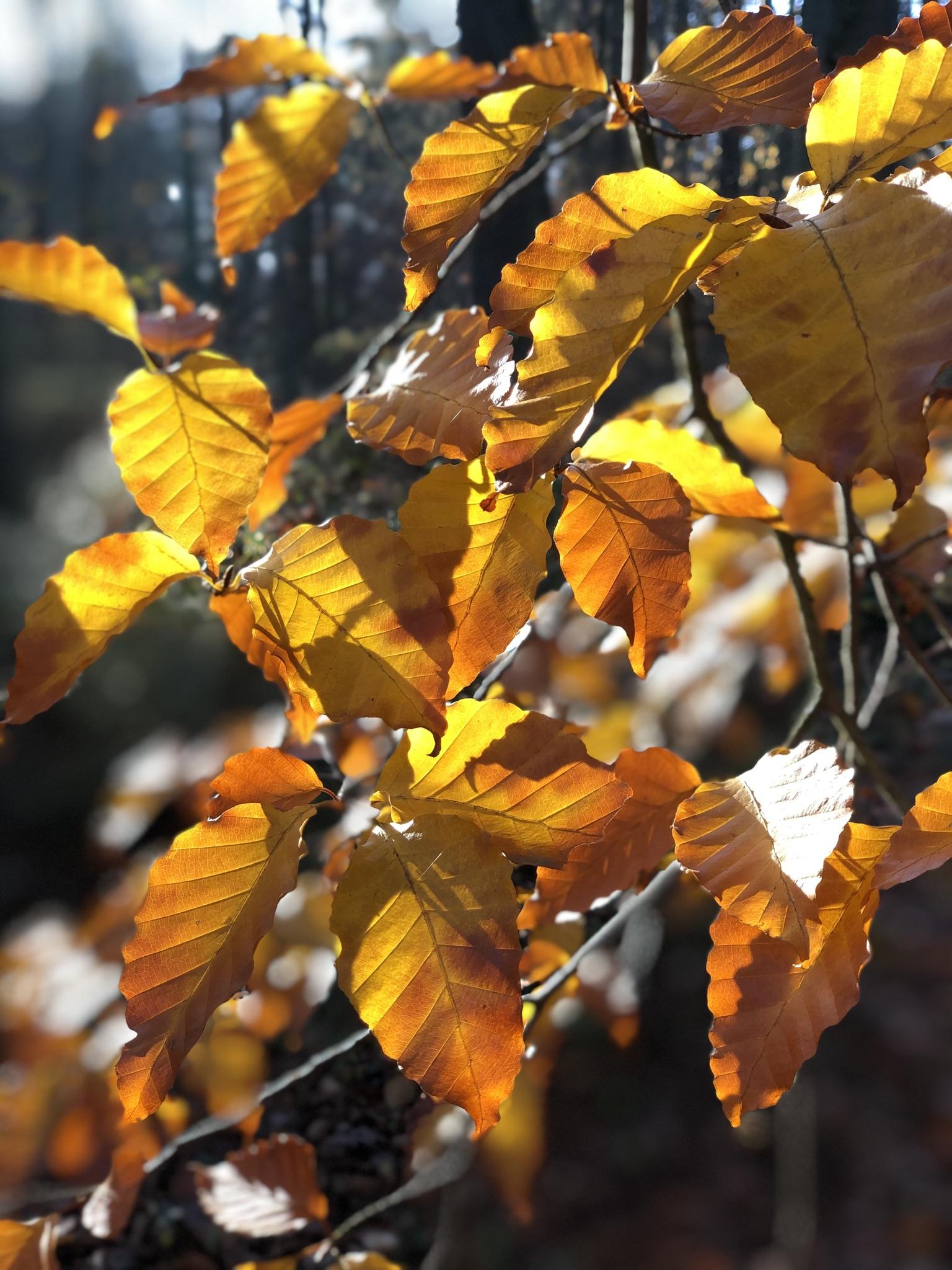 Zwiedzanie Arboretum w Rogowie jesienią